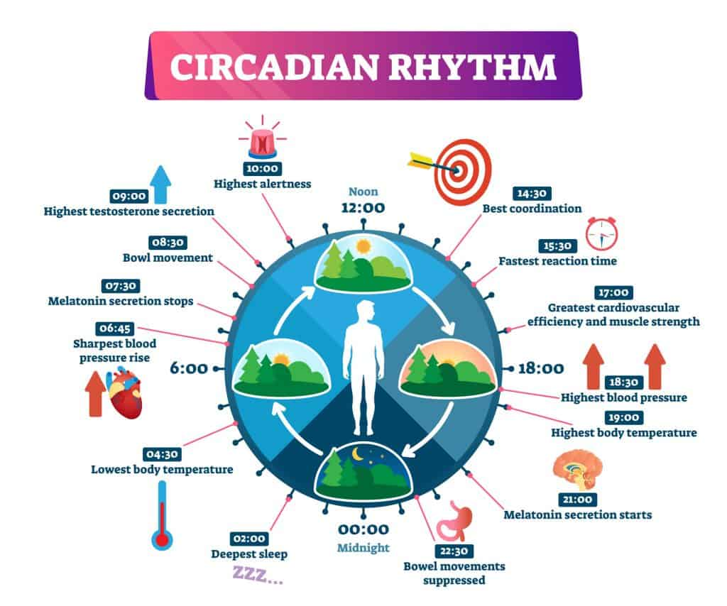 Circadian Rhythm for morning workout