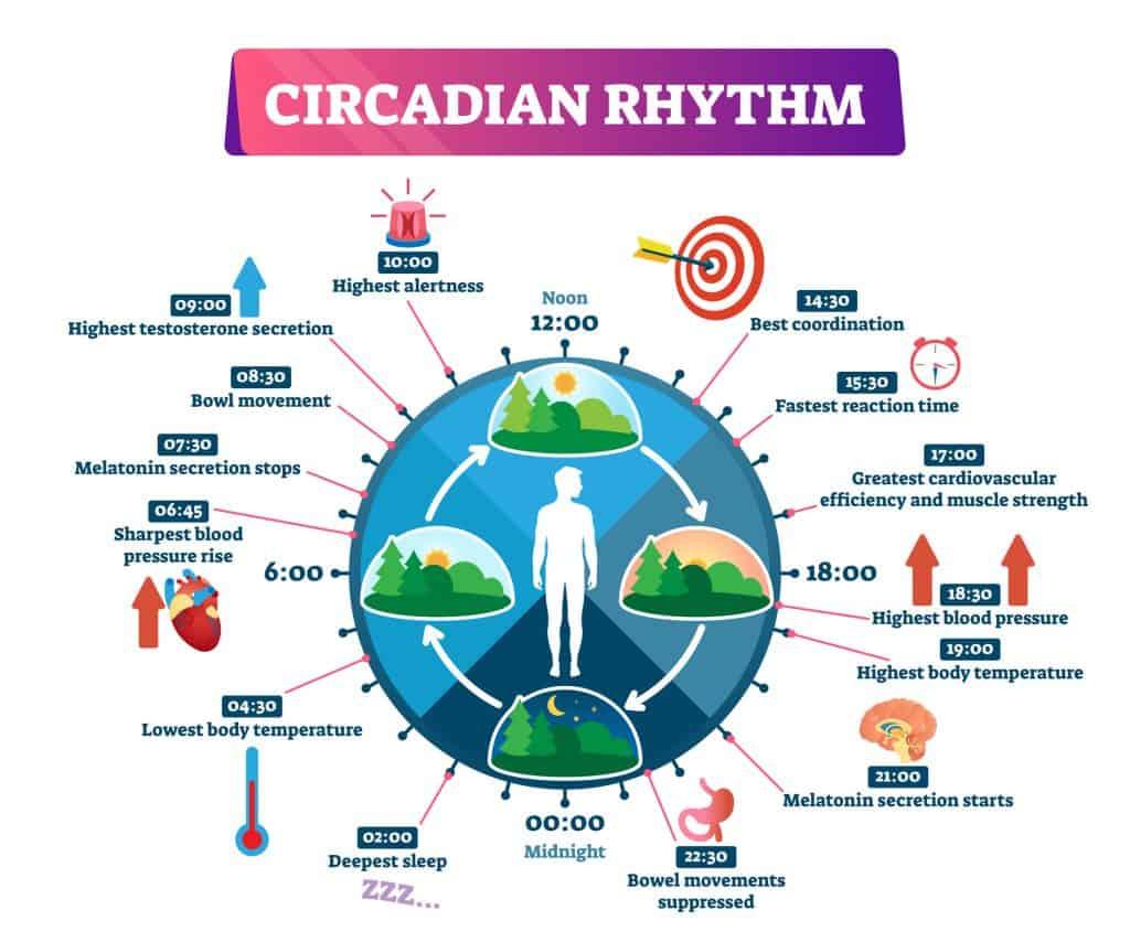 Circadian Rhythm for morning workout