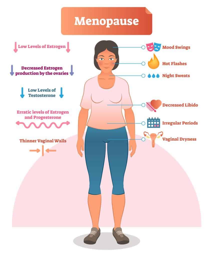 Estrogen and Insulin Resistance