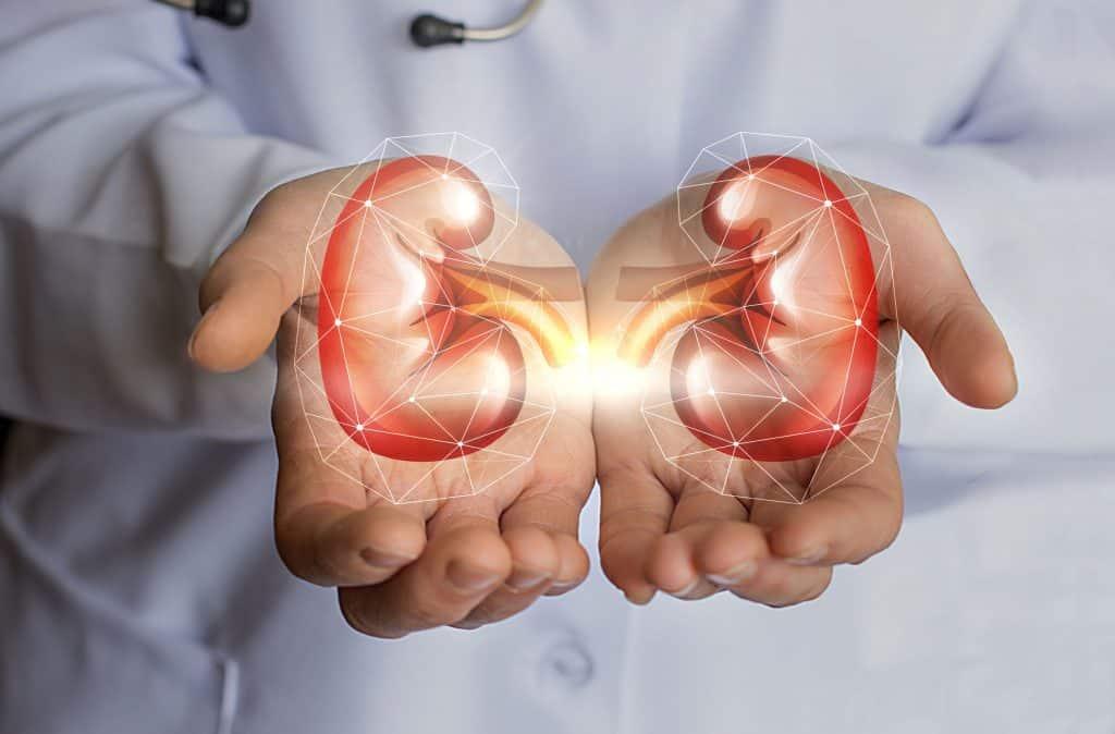 CBD Oil Side Effects on Kidneys